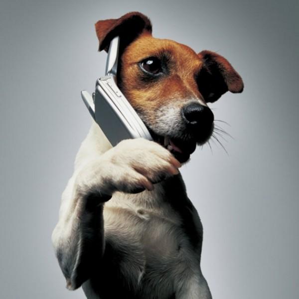 Создан смартфон для собак