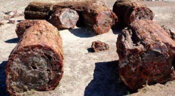 Экспедиция в Антарктиде обнаружила останки древних лесов