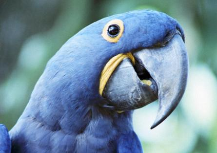 Учёные выяснили что пение птиц идентично человеческой речи