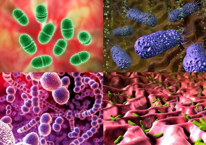 Создано новое лекарство, которое сменит антибиотики