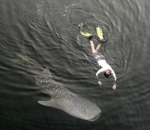 Акулы в Дубае