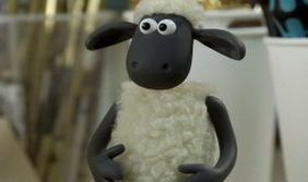 Овцы могут распознавать лица по фотографиям