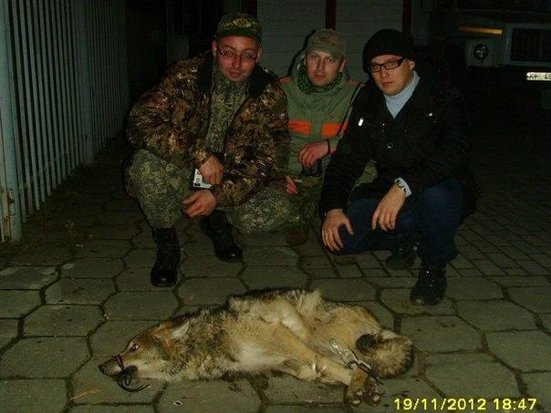 Дикий волк, напугавший жителей Уручья, задержан сотрудниками ОМОНа