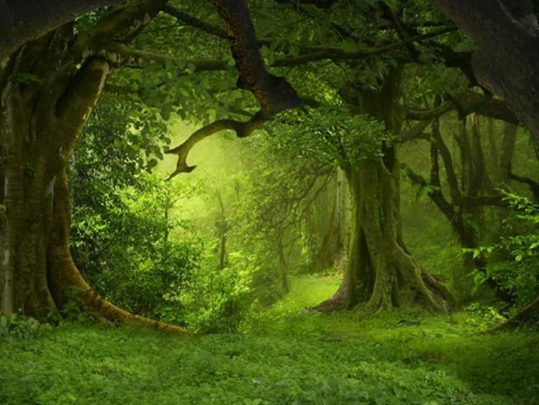 Стихия Земли: характеристика, особенности и таланты земных знаков Зодиака | EX-PRESS.BY
