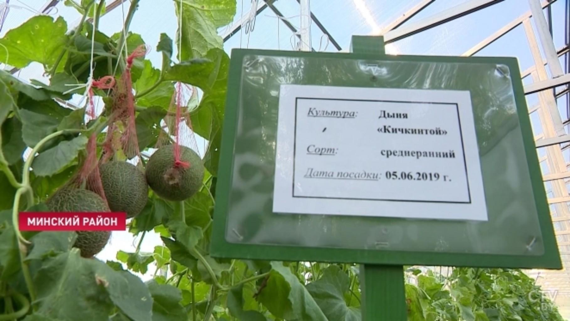 1569252730 prezidentskoe podvore aleksandr lukashenko 23 09 5