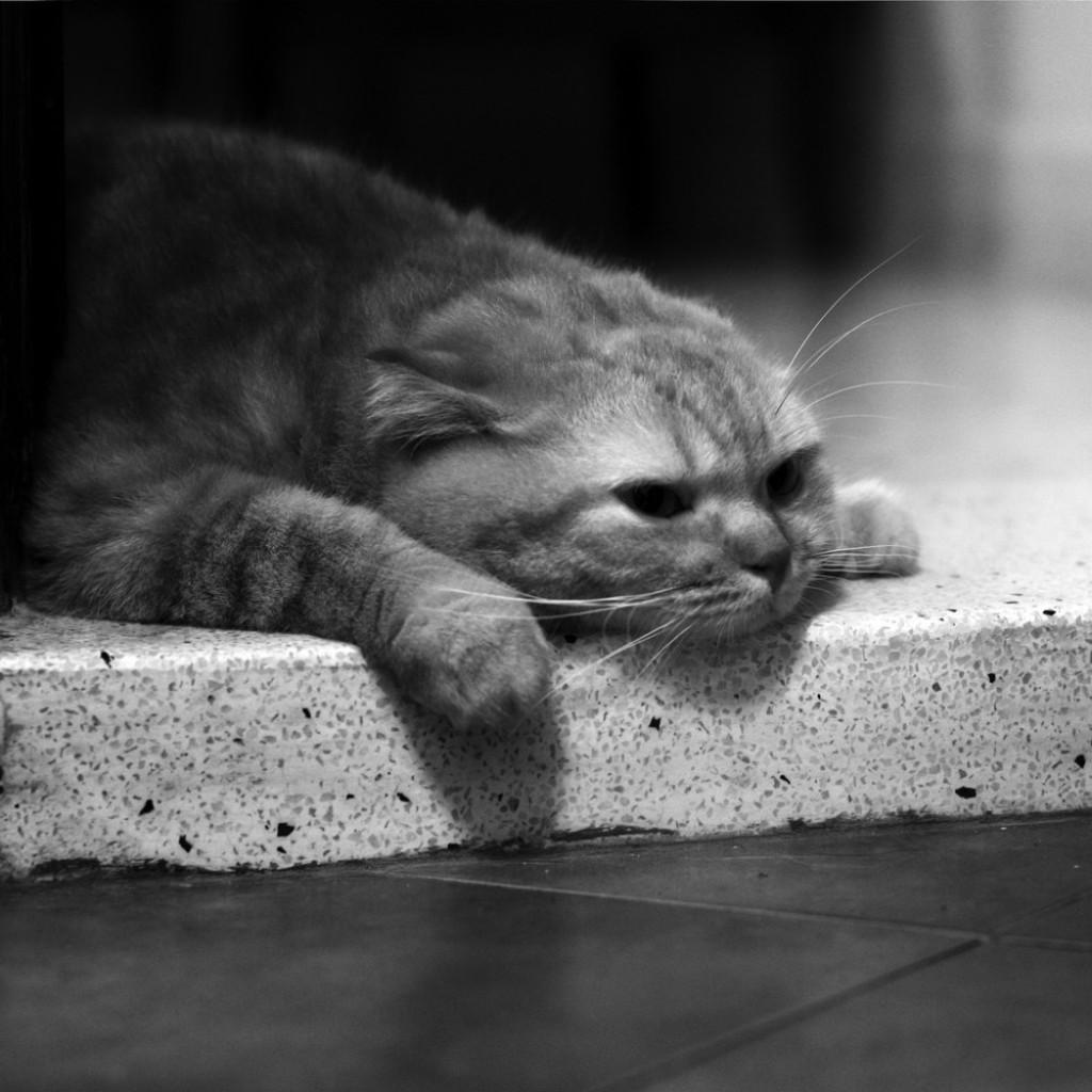 Веселые картинки про грусть и тоску россии