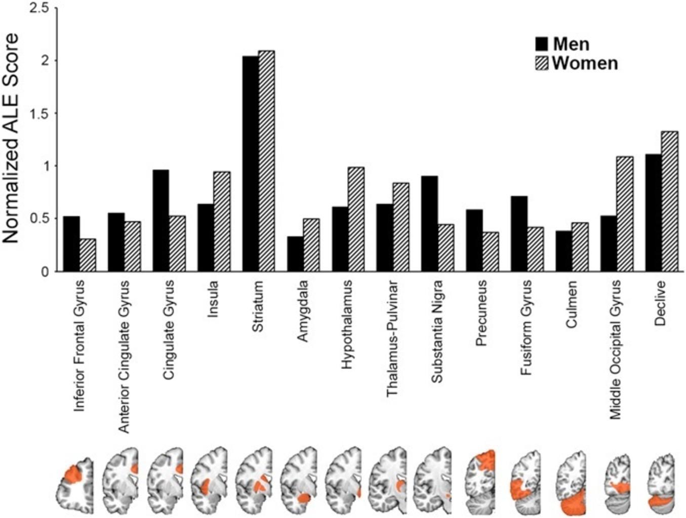 Активация различных участков мозга при половом возбуждении от просмотра эротических фото и видео у мужчин и женщин. Фото: Ekaterina Mitricheva et al. / Proceedings of the National Academy of Sciences, 2019