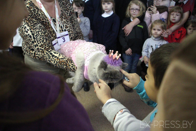 Почти тысяча детей и взрослых посетили выставку кошек