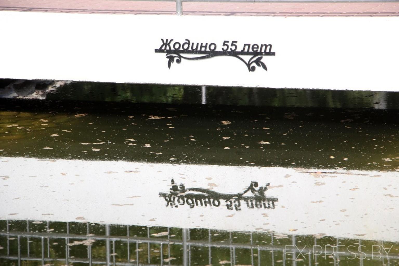 «Чтобы еще раз вернуться», в жодинский водоем бросают монетки и трусы. Фотофакт
