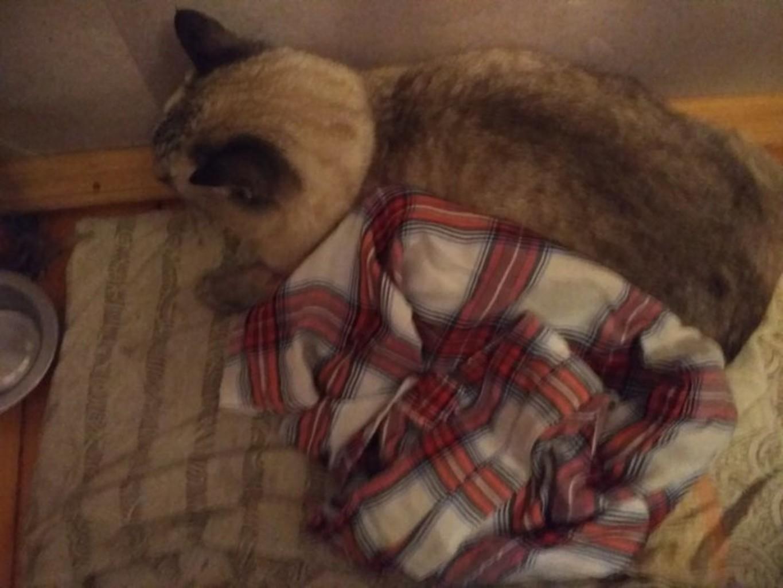 Фото: Группа Вконтакте «Помощь коту (выбросили из окна, Серебрянка)»