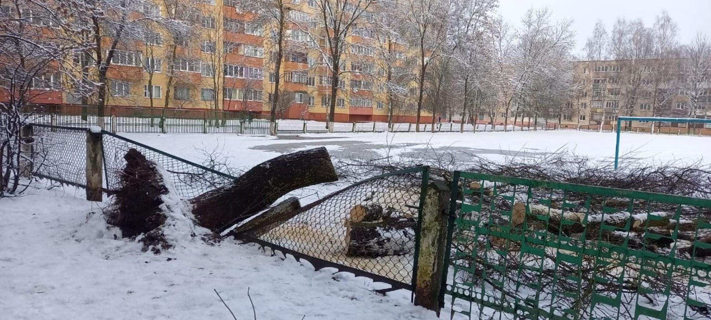 В Жодино упавшее дерево помяло школьный забор. Фотофакт