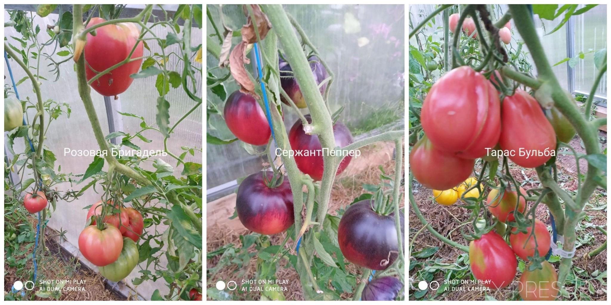 Tomatk4