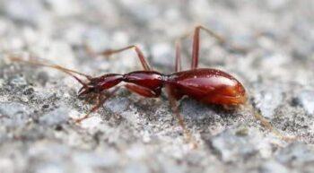 Царство пещерных жуков обнаружили в Южном Китае
