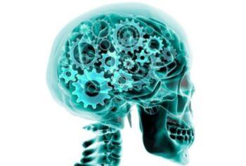 Учёные обнаружили в мозге молекулярный «Турбо» режим