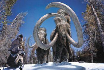 Учёные решили доказать Путину что они смогут клонировать мамонта