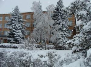 Лес пушистым снегом запорошен  год дракона по снегу идет!