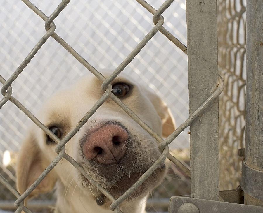 Для тех, кто берёт животных из приютов, «Зелёные» предлагают ввести меры господдержки